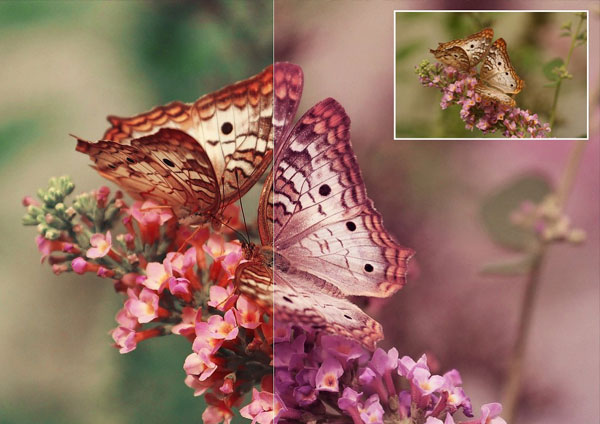 Download Nature Photoshop Actions