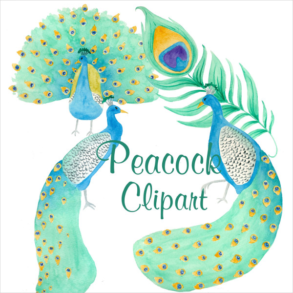Peacock Clipart With Pattern