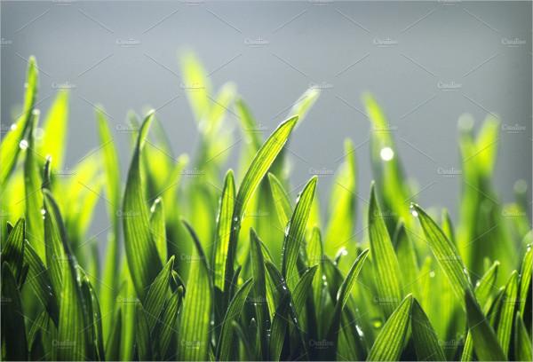 Tiny Soft Grass Texture Backgrounds