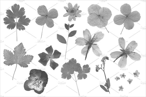 Pressed Flowers Photoshop Brushes