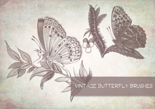 Vintage Butterfly Brushes
