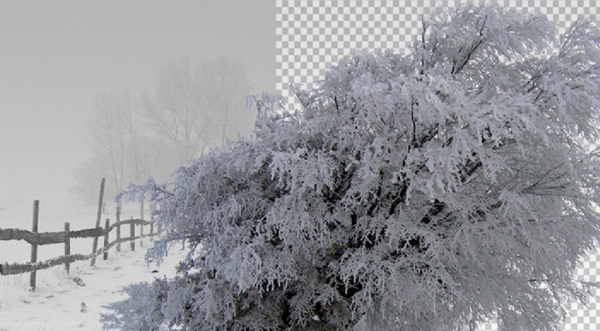 Winter Trees on Transparent Background
