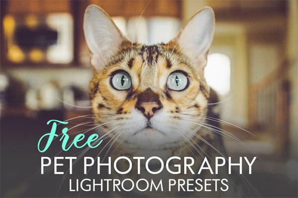 Free Pet Photography Lightroom Presets