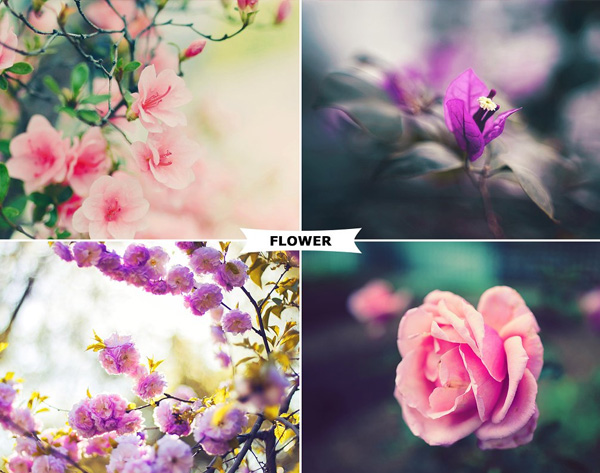 Flowers Photoshop Actions Template