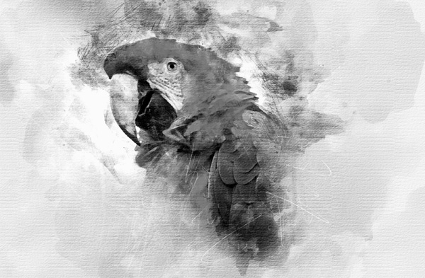 Watercolor Black and White Action for Photoshop Template